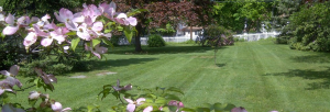 Landscaping with flowering trees